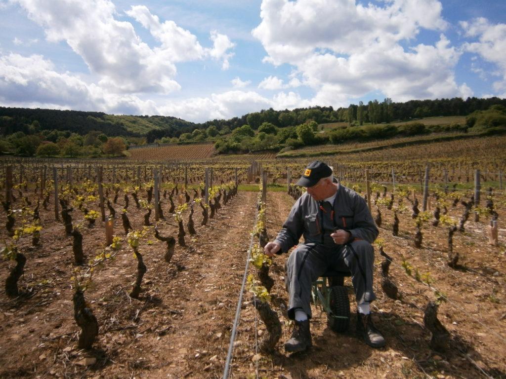 Travail de la vigne Mai
